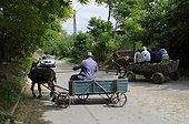 Harness with Donkey and horse Somova, Danube Delta, Romania