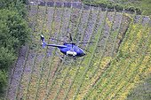 Helicopter spraying vineyards on slopes of Mosel Valley Germany