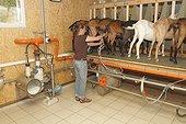 Salle de traite de la chèvrerie de Saint-Nicolas-de-Bliquetuit (76)