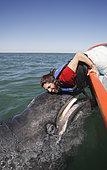 Baleine grise (Eschrichtius robustus). Baleineau sympathique se rapprochant du bateau et faisant contact avec une touriste chanceuse. Lagune de San Ignacio, Baja, Mexique.