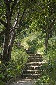 Domaine du Rayol, le Jardin des Méditerranées Mention obligatoire Escalier en pierre au milieu de la végétation
