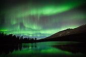 Aurora borealis, reflections and Scots pines, Tromsø area, Norway