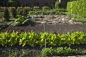 Common Parsley (Petroselinum crispum), Lettuce 'Lollo Rossa', Glass bell and mulch, Park and orchards 'Les Près', Garden, Cider house and guest rooms, 9 ha park of a century-old family manor with hundreds of plants, Criel-sur-Mer, Normandy, France