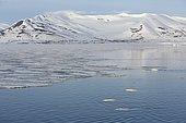 Bélugas (Delphinapterus leucas) et banquise côtière, Brepollen, Hornsund, Sud du Spitzberg, Svalbard