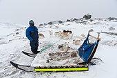 Dog sledge, Ilulissat, Disko bay, Greenland.