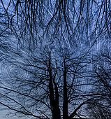 Long time exposure on starry nocturnal sky as seen across a tree, Spain