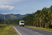 Paysage avec Plantation de Palmiers à huile et Déforestation. Bornéo. Malaisie.