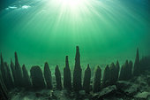 """Remains of a """"zigzag"""" palisade of the 16th century, immersed in the bottom of Lake Bourget. Savoie, France"""
