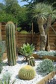Cactus, Chaumont sur Loire Gardens Festival 2015