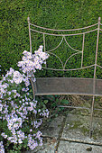Metal Bench and Aster in Bloom, Le Jardin de Valérianes, Normandy, France