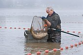 Draining pond fishing, Malsaucy, Territoire de Belfort, Franche Comté, France