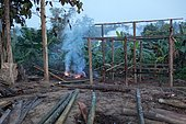 In the Taungoo area, elephants are used from November to March for skidding trunks of precious trees. At Mying Whai Wynn, mahouts of the Bamas ethnic group go for the Iron Wood and the teak in the jungle near their village.