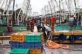 Fishing in Kerata. Unloading of crawlers in the Beypore port.