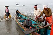 Fishing in Kerala. Unloading of fishes on the Tellicherry beach