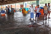 Port de pêche de Calicut. une raie sur le sol dans le port de Calicut