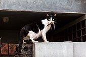 The cat in Tellicherry. A cat holding its prey at the Tellicherry port
