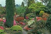 Rhododendrons in bloom at Leonardslee lakes & gardens, Rock garden, Sussex, England, UK