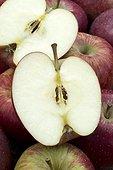 Apple 'Red Delicious'