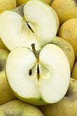 Apple 'Chantecler' - Obtention INRA Angers.