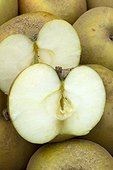 Apple 'Reinette grise du Canada'