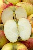 Apple 'Dalinbel'. Nom commercial : Pomme Antarès