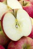 Apple 'Cripps Pink'. Nom commercial : Pomme Pink Lady.