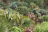 Agave, Aeonium, Phormium, Opuntia, Aloe in an exotic rock. Public garden of the moulin neuf. Ploudalmézeau. Finistere. Britain. la France