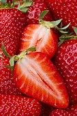 Strawberries 'Ronde Lou Castet' . Fragaria x ananassa