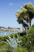 Cabbage Tree (Cordyline australis), Japanese Spindle (Euonymus japonicus) and Century Plant (Agave americana). Ile de Batz. Finistere. Britain. la France