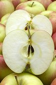 Apple 'Collina'
