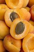 Apricot (Prunus armeniaca) 'Bergeron' fruits