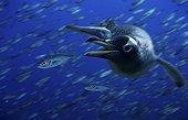 Gentoo penguin, Pygoscelis papua. Fishing Horse mackerel. Composite image.. Composite image
