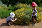 Two children in front of a bush of Lavender cotton (Santolina chamaecyparissus) flowers in a garden