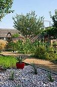 Agaves, Jardin de la Maourine, Jardin appartenant au muséum d'histoire naturelle de Toulouse, France