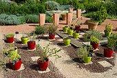 Plantes aromatiques en pots, Jardin de la Maourine, Jardin appartenant au muséum d'histoire naturelle de Toulouse, France