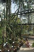 Enfant assis devant des cactus dans des serres du muséum d'histoire naturelle de Toulouse, France
