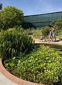 Promeneur et mare avec des Nénuphars au Jardin du muséum d'histoire naturelle de Toulouse, France