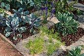 Vue sur un potager avec des choux, Jardin de la Maourine, Jardin appartenant au muséum d'histoire naturelle de Toulouse, France