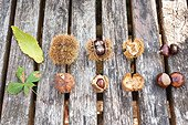 Chestnuts and Horse chestnuts on a garden table, autumn, Moselle, France