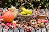 Harvest of fruits and vegetables in a garden in autumn, Lorraine, France
