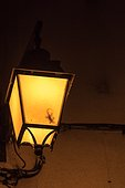 Shadow of a Crocodile Gecko (Tarentola mauritanica) in a lamppost in summer, Provence, France