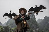 En chine sur la rivière Li, les pêcheurs utilisent des cormorans.