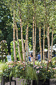 'Jardins Jardin' Session de juin 2015, Création Truffaut