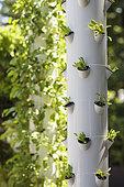 'Jardins Jardin' Session of June 2015, Création Mon Jardin et Ma Maison: ' Les terrasses nourricières - La ville de demain sera verte et heureuse'