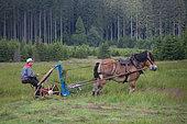 fauche hypotractée- fauche avec cheval de Trait Ardennais Réserve naturelle-prairie maigre-lutte contre tassement du sol Ardenne
