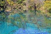 Colorful lake, Jiuzhaigou valley, Sichuan, China