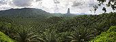 Plantation de Palmiers à huile (Elaeis guineensis) et pico Cao Grande société Agripalma, filiale de la Socfin, Village de Monte Mario, Île de Sao Tomé-et-Principe