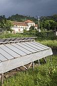 Solar dryer for cocoa beans, Ponta Figo, Sao Tome and Principe Island