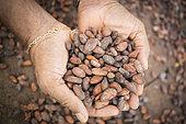 Cocoa beans handing in a solar dryer, Village of Bela Vista, Sao Tome and Principe Island