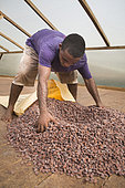 Dry cocoa bagging, Drying and bagging center, CECAB, Organic Cocoa Production and Export Cooperative, Fair Trade, Guadalupel, Island of Sao Tome and Principe